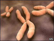 _46726409_f002179-chromosome-spl